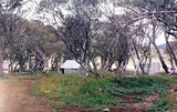 Picture of / about 'Howitt Plains' Victoria - Howitt Plains camp ground