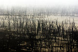 Picture relating to Chichester Range - titled 'Ruined Trees in Dumbleyung Lake'