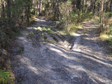 Picture relating to Ballarat-Creswick Regional Park - titled 'Walking Track damage from miss-use of 4-Wheel  Drives in Park'