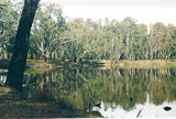 Picture relating to Wahgunyah - titled 'Wahgunyah: Murray Rv Reserves - St Leonards lagoon'