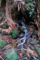 Picture relating to Cuckoo Falls - titled 'Small stream'