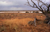 Picture relating to Lake Everard - titled 'Lake Everard'