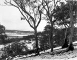 Picture relating to Braddon - titled 'Record fall of snow - North end of Braddon under snow, from Mt Ainslie .'