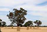 Picture of / about 'Murray Valley Highway' Victoria and New South Wales - Murray Valley Highway