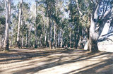 Picture relating to Echuca Village - titled 'Echuca Village: Echuca Regional Park, Christies Beach'