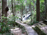 Picture of / about 'Kondalilla National Park' Queensland - Kondalilla National Park