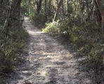 Picture of / about 'Daylesford' Victoria - Forest Trails at Daylesford