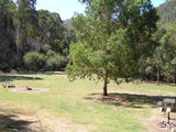 Picture of / about 'State Forest' Victoria - State Forest, Mitta Mitta; Lightning Creek Camp Ground