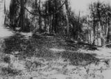 Picture relating to Goodna - titled 'Bushland at Goodna'