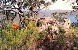 Picture relating to Hawkesbury River - titled 'Hawkesbury River bushland'
