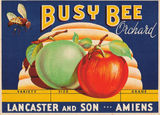 Picture relating to Amiens - titled 'Apple Packing Case Label'
