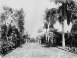 Picture relating to Bowen Hills - titled 'View along a palm tree-lined path in Bowen Park, Brisbane, 1889'