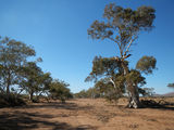 Picture of / about 'Whittle (Ngarutjaranya) Creek' South Australia - Whittle (Ngarutjaranya) Creek