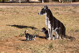 Picture of / about 'Cleve' South Australia - Tin Sculpture Cleve SA