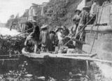 Picture relating to Innisfail - titled 'Chinese labourers loading bananas onto a steamer at Geraldton, Queensland, 1906'