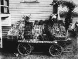Picture relating to Brisbane - titled 'Show exhibit for Campsie Fruit Farms at Ormiston, 1914'