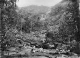 Picture relating to Daintree River - titled 'Daintree River, near Mossman, Queensland, ca. 1885'