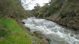Picture relating to Ovens River - titled 'The Ovens River after rain'