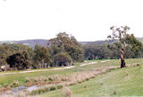Picture relating to Hughes Creek - titled 'Hughes Creek: Green Hill camping reserve'