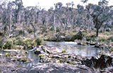 Picture relating to Werrikimbe National Park - titled 'Upper Hastings River, Werrikimbe National Park'