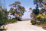 Picture relating to Lake Hindmarsh - titled 'Lake Hindmarsh, The Wattles'