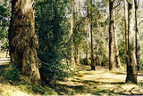 Picture relating to Yarra River - titled 'Yarra River; Millgrove camp ground'