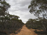 Picture relating to Munyaroo Conservation Park - titled 'Munyaroo Conservation Park'