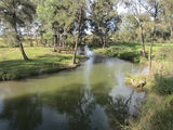 Picture relating to Cudgegong River - titled 'Cudgegong River at the back of the Riverside Caravan Park in Mudgee'