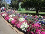 Picture relating to Toowoomba - titled 'Queens Park'