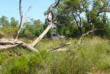 Picture of / about 'Thrushton National Park' Queensland - Thrushton National Park