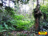 Picture of / about 'Tinana Creek' Queensland - Tinana Creek