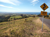 Picture relating to Illawarra Range - titled 'On the road back down from Saddleback Mountain.'