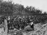 Picture relating to Ballandean - titled 'Picking grapes at Ballandean, ca.1915'