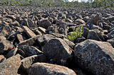 Picture of / about 'Rats Castle' Tasmania - Rats Castle....boulder field