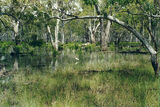 Picture of / about 'Reedy Lake' Victoria - Reedy Lake edge