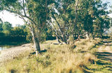Picture relating to Barnawartha North - titled 'Barnawartha North: Murray River Reserves - Richardsons Bend'