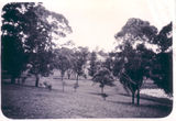 Picture of / about 'Sherwood' Queensland - Sherwood
