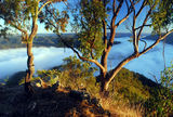 Picture relating to Guy Fawkes River National Park - titled 'Morning mist from the bluff'