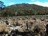 Picture of / about 'Rats Castle' Tasmania - Rats Castle over one of the boulder fields
