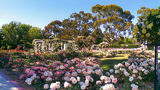 Picture relating to Old Parliament House - titled 'Old Parliament House Rose Gardens'