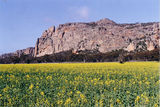 Picture of / about 'Mount Arapiles' Victoria - Mount Arapiles