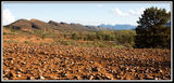 Picture of / about 'Flinders Ranges National Park' South Australia - Flinders Ranges National Park
