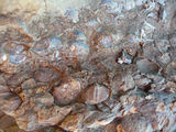 Picture relating to Woolshed Creek Geological Monument - titled 'Fossils embedded in mudstone'