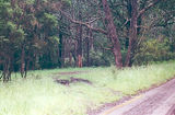 Picture relating to State Forest - titled 'Jancourt State Forest picnic ground'