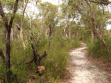 Track to Maddens Creek 1