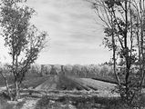 Picture relating to Yarralumla - titled 'Fruit Trees in blossom. Small trees growing in front, Yarralumla Nursery.'