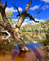 Picture of / about 'Eramurra Creek' Western Australia - Eramurra Creek