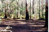 Picture relating to Murrindindi River Scenic Reserve - titled 'Murrindindi River Scenic Reserve; Bull Cr Camp Ground'