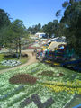 Picture relating to Canberra - titled 'Floriade - view from the ferris wheel'