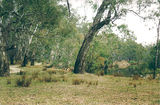 Picture relating to Dugays Bridge - titled 'Dugays Bridge: Murry Rv Reserves - Lumbys Bend'